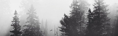 Daguerrotypes 08 / Amazing fog